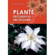 PLANTE DECORATIVE URCATOARE