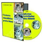 CD - Cresterea chinchilelor pentru blana