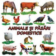 Animale si pasari domestice (Carte cu imagini color)
