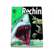 Rechini. Enciclopedie - Insiders