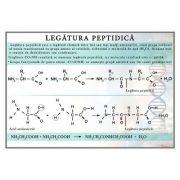 Legatura peptidica. Plansa