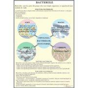 Plansa bacterii
