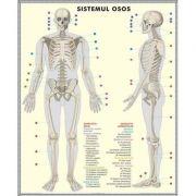 Plansa cu 2 teme distincte- Schelet - Sistemul muscular. Plansa DUO.