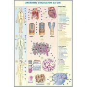 Plansa cu 2 teme distincte. Sistemul circulator la om - Sistemul circulator la animale. Plansa DUO.