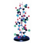 Model - Structura proteinei secundare