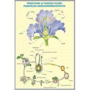 Structura si functia florii la plante de tip Angiospermatophyta - Structura si functiile frunzei. Plansa DUO.