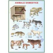 Plansa. Animale domestice