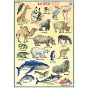 Plansa. La Zoo