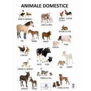 Plansa - Animale domestice
