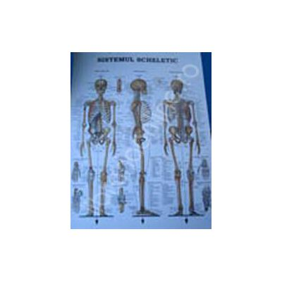 Sistemul scheletic