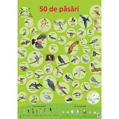 Plansa - 50 de pasari